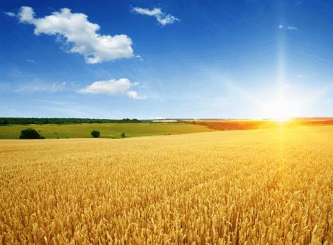 Terrain Agricole - Tamouil Akkarat El Afrad